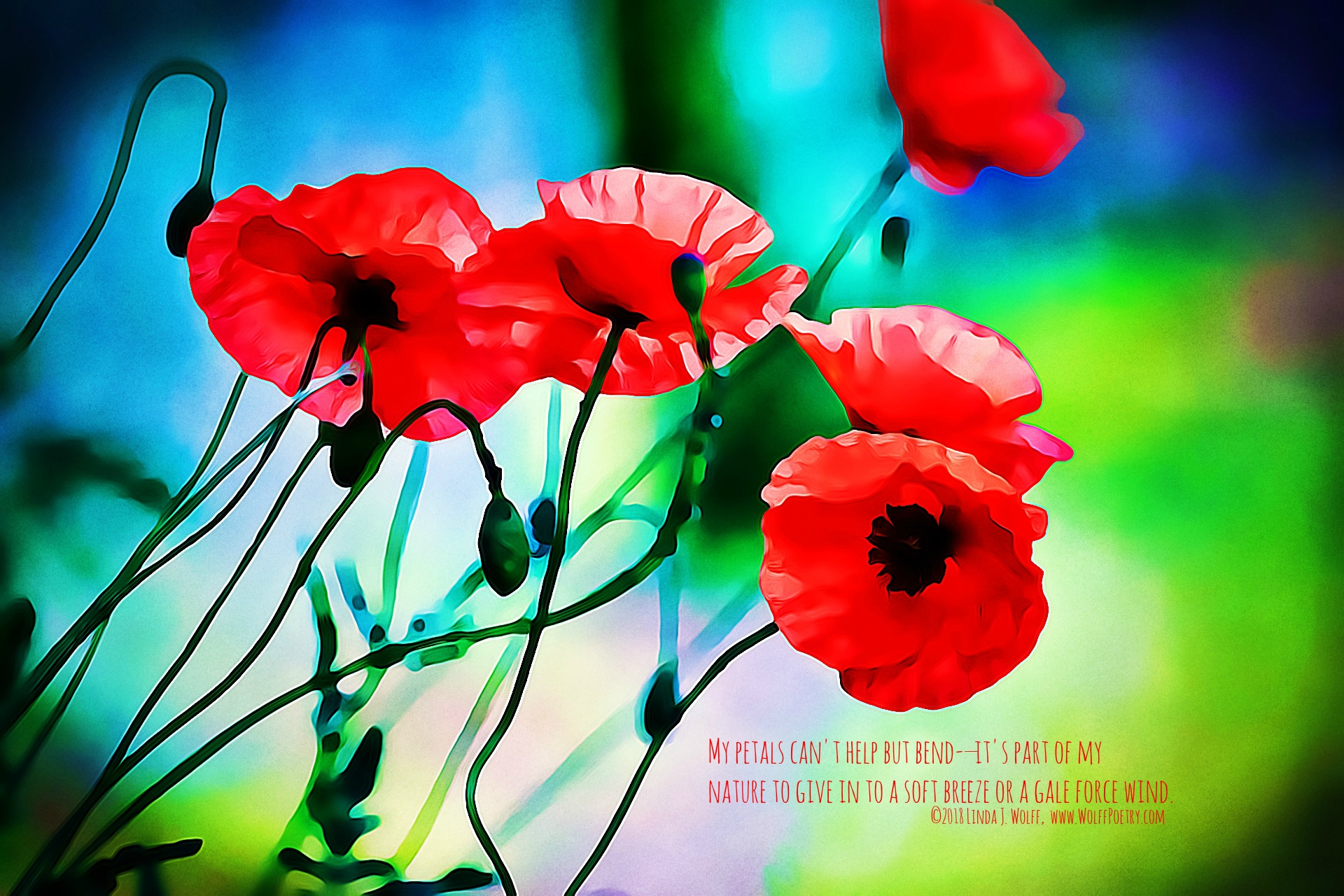 A red poppys diary poem wolff poetry writing writers mightylinksfo